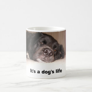 kATIE & cO. 053, It's a dog's life Magic Mug