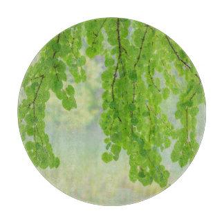 Katsura Tree Limbs in Springtime | Seabeck, WA Boards