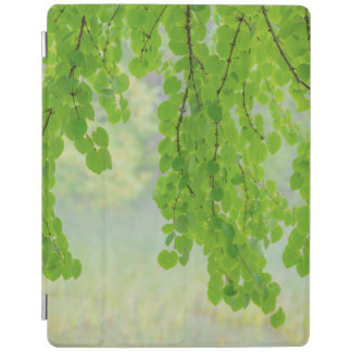 Katsura Tree Limbs in Springtime   Seabeck, WA iPad Cover