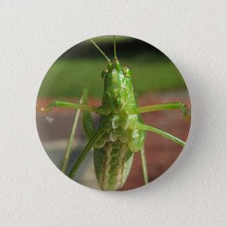 Katydid ~ button