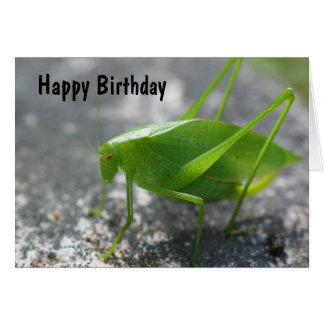 Katydid Grasshopper Nature Birthday Card