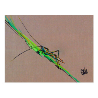 Katydid, Katydidn't (not a grasshopper) Postcard