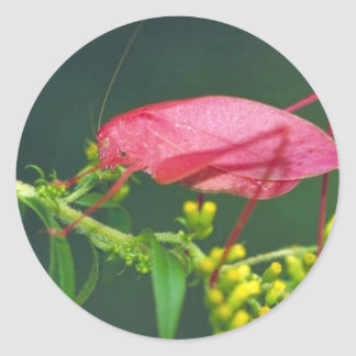 Katydid on Early goldenrod Classic Round Sticker