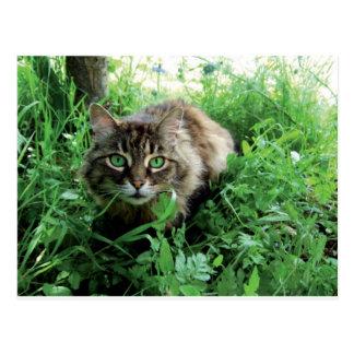 Katze Postcard