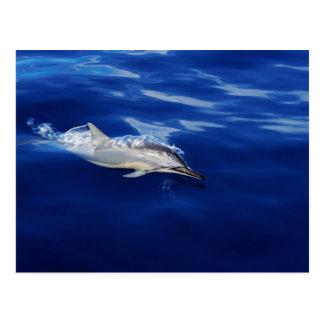 Kauai - Dolphin Breaking Free Postcard