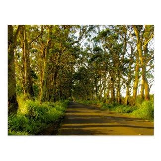 Kauai - The road to Poipu Postcard