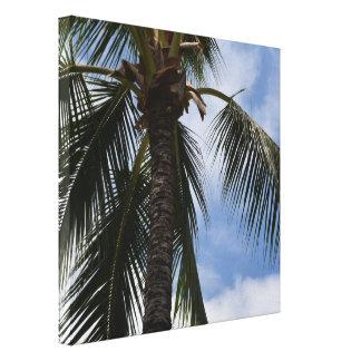 Kauai Tropical Palm Tree Canvas Print