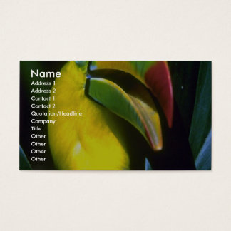 Keel-billed toucan business card