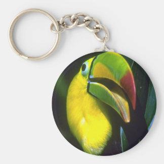 Keel-billed toucan keychain
