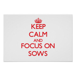 Keep Calm and focus on Sows Poster