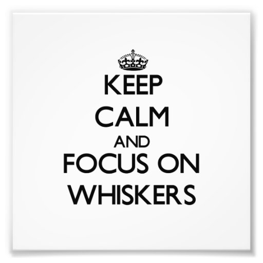 Keep Calm and focus on Whiskers Art Photo