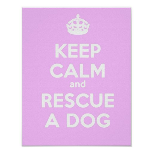 KEEP CALM AND RESCUE A DOG- PINK POSTERS