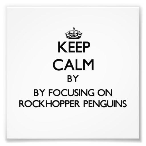 Keep calm by focusing on Rockhopper Penguins Art Photo
