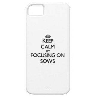 Keep Calm by focusing on Sows iPhone 5 Covers
