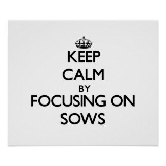 Keep Calm by focusing on Sows Poster