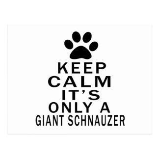 Keep Calm Its Only A Giant Schnauzer Postcard
