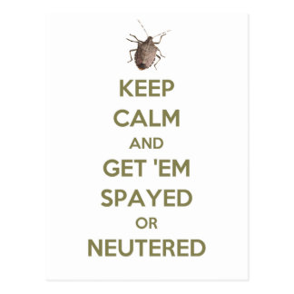 Keep Calm Stink Bug Postcard
