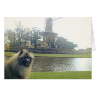Keeshond and Windmill Card