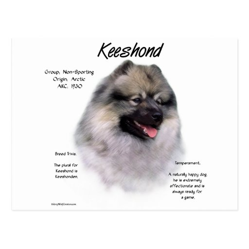 Keeshond History Design Postcards