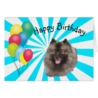 Keeshond on white Starburst Happy Birthday Card