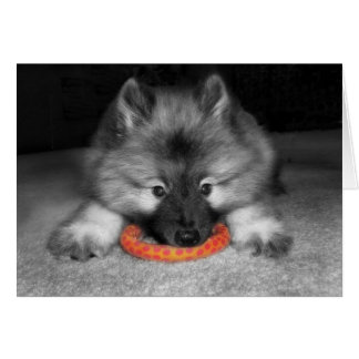 Keeshond Puppy Note Card