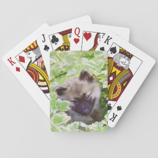 Keeshond Puppy Playing Cards