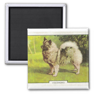Keeshond Square Magnet