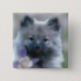 Keeshond with Columbine 2 Inch Square Button