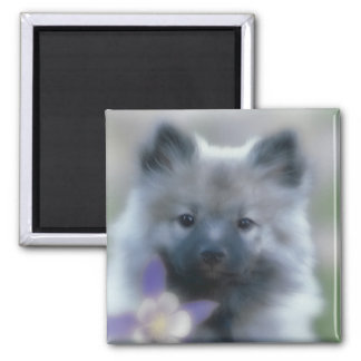 Keeshond with Columbine Magnet