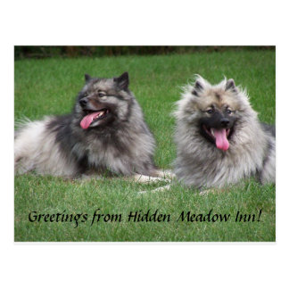 Keeshonds Apache & Havel Smiling Dutchmen Postcard