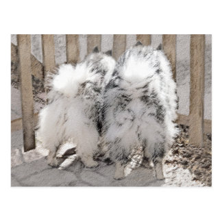 Keeshonds at the Gate Painting - Original Dog Art Postcard