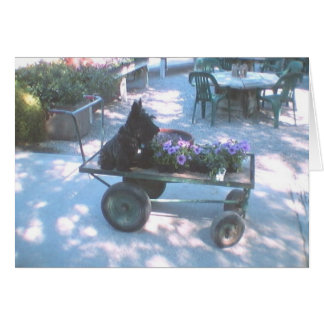 Kelly Boo on Flower Cart Greeting Card
