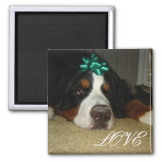 Kelly's Bernese Mountain Dogs Magnet