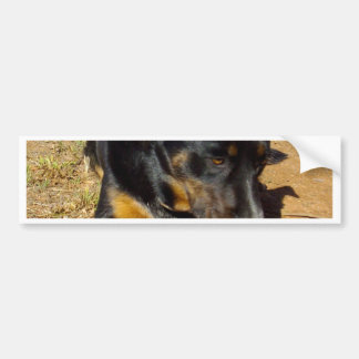 Kelpie_Farm_Life,_ Bumper Sticker