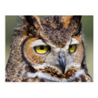 Kendall County, Texas. Great Horned Owl Postcard