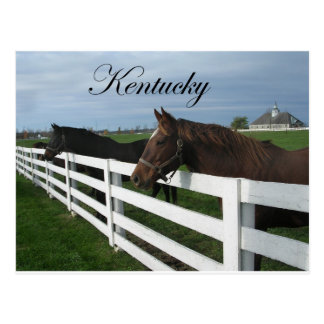 Kentucky Bluegrass Country Postcard