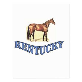 Kentucky horse postcard