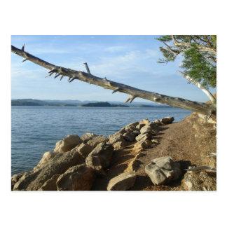 Kentucky Lake Shoreline Post Card
