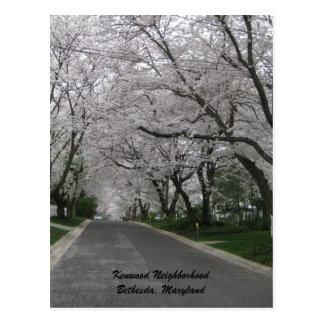Kenwood Neighborhood, Bethesda, Maryland Postcard
