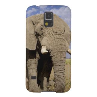 Kenya: Amboseli National Park, male elephant Galaxy S5 Covers