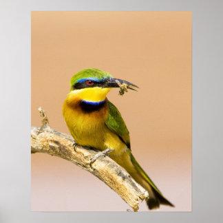 Kenya. Close-up of little bee-eater bird on limb Poster