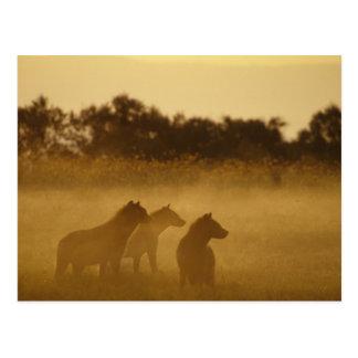 Kenya: Lake Turkana National Park, pack of Postcard