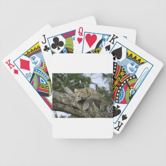 Kenya Leopard Tree Africa Safari Animal Wild Cat Bicycle Playing Cards