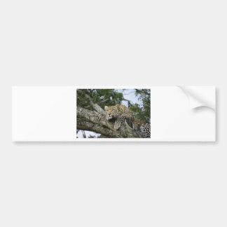 Kenya Leopard Tree Africa Safari Animal Wild Cat Bumper Sticker