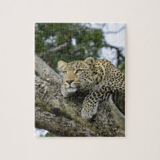 Kenya Leopard Tree Africa Safari Animal Wild Cat Jigsaw Puzzle