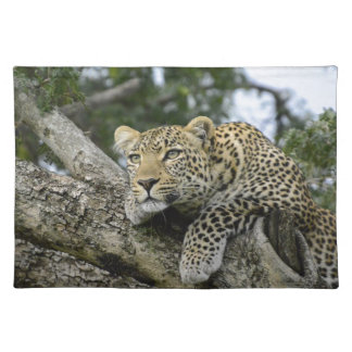 Kenya Leopard Tree Africa Safari Animal Wild Cat Placemat