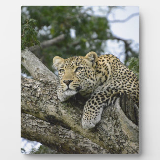 Kenya Leopard Tree Africa Safari Animal Wild Cat Plaque