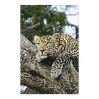 Kenya Leopard Tree Africa Safari Animal Wild Cat Stationery