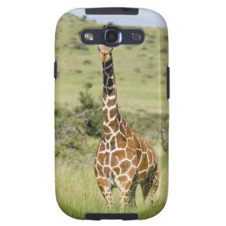 Kenya, Lewa Conservancy, Masai Giraffe standing Galaxy S3 Cases