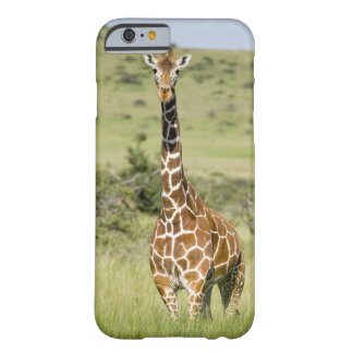 Kenya, Lewa Conservancy, Masai Giraffe standing Barely There iPhone 6 Case